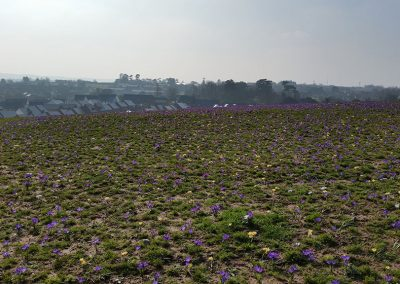 Exminster Bulb planting